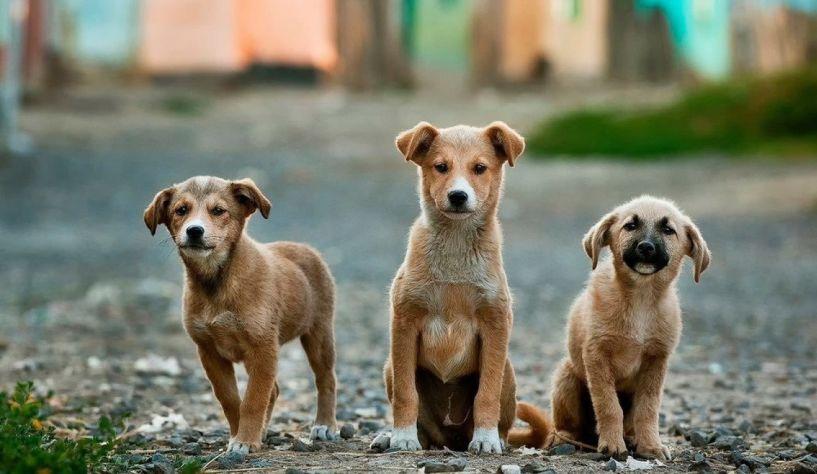 Προσλήψεις τριών εργατών για την φροντίδα των αδέσποτων ζώων στον Δήμο Νάουσας
