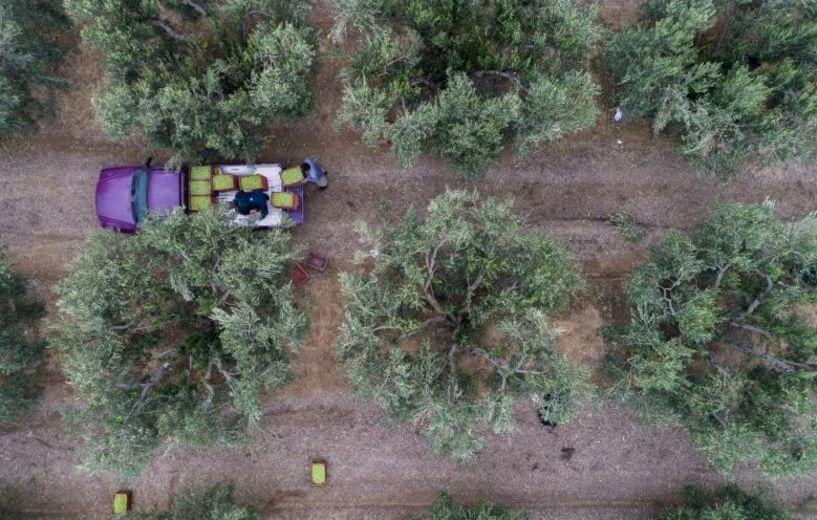 Ο τρόπος που οι νέοι αγρότες μπορούν να απαλλαγούν από το ΦΠΑ