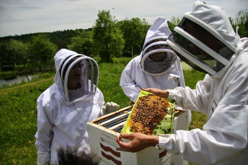 Αίτηση συμμετοχής στις δράσεις «Αντικατάσταση κυψελών»  και «Οικονομική στήριξη  της νομαδικής  μελισσοκομίας»