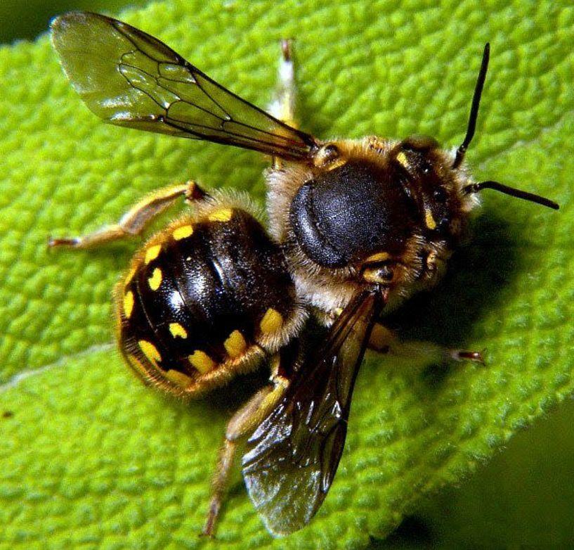 Για πρώτη φορά  παγκόσμια ημέρα μέλισσας  στις 20 Μαΐου