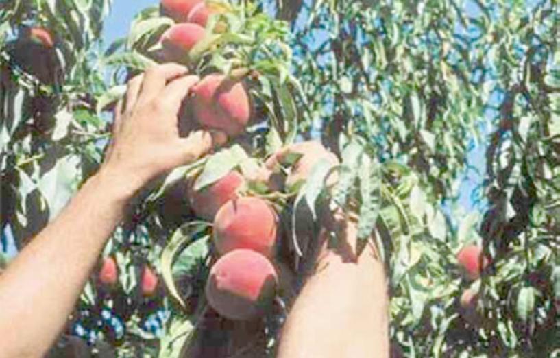 Τροπολογία για μετάκληση εργατών γης από τρίτες χώρες, κατά παρέκκλιση της κείμενης νομοθεσίας, λύνει το χρόνιο αίτημα των αγροτών