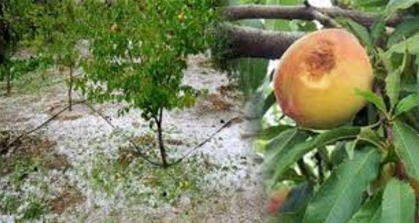 Ασφαλιστικά μέτρα κατά του ΕΛΓΑ κατέθεσαν το πρωί, Κοινοπραξία και Συνεταιρισμοί – Ο Οργανισμός κούνησε το μαντήλι στις αποζημιώσεις από βροχές