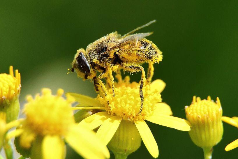 Στέγες πράσινου στις στάσεις λεωφορείων για τις μέλισσες! - Ο παγκόσμιος πληθυσμός τους εξακολουθεί να συρρικνώνεται