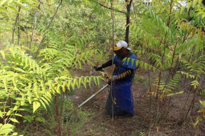 Σε καθαρισμό των δημοτικών αλσών για πυροπροστασία προχωρά ο Δήμος Βέροιας (Εικόνες)