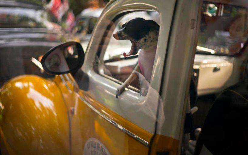 Ιστορικά αυτοκίνητα ακινητοποιούνται… μέχρι νεωτέρας