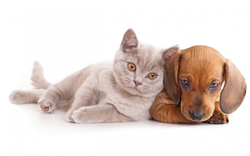 Έρχεται θέσπιση τελών για αγορά ζώου συντροφιάς