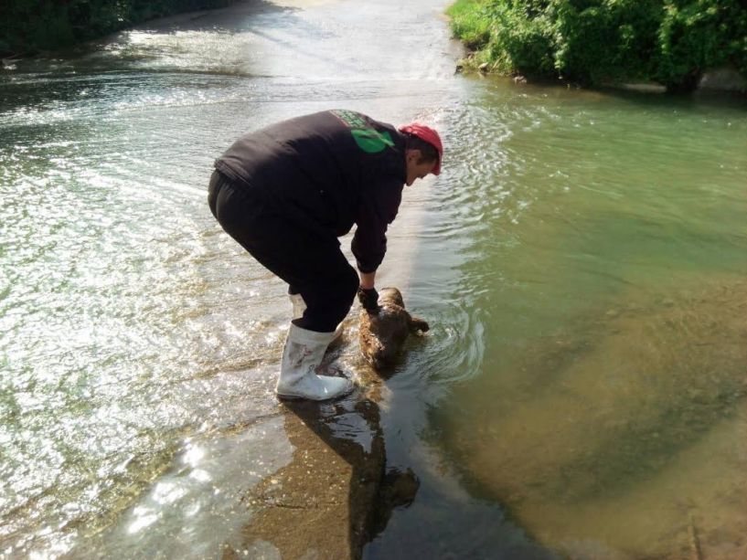 Με ενέργειες του σφαγείου «ΜΠΕΛΛΑΣ» οδηγήθηκε η μοσχαροκεφαλή που βρέθηκε στο ποτάμι στον αποτεφρωτικό κλίβανο