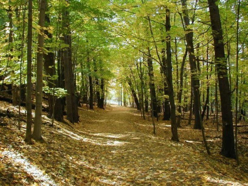 Ξεκίνησε η διαβούλευση για την Εθνική Στρατηγική για τα Δάση