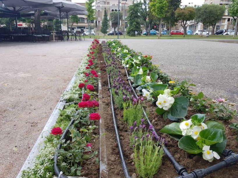Νέοι κάδοι σκουπιδιών και πάνω από 500 καλλωπιστικά φυτά και λουλούδια στην Πλατεία Ελιάς για την αισθητική αναβάθμισή της (Εικόνες)