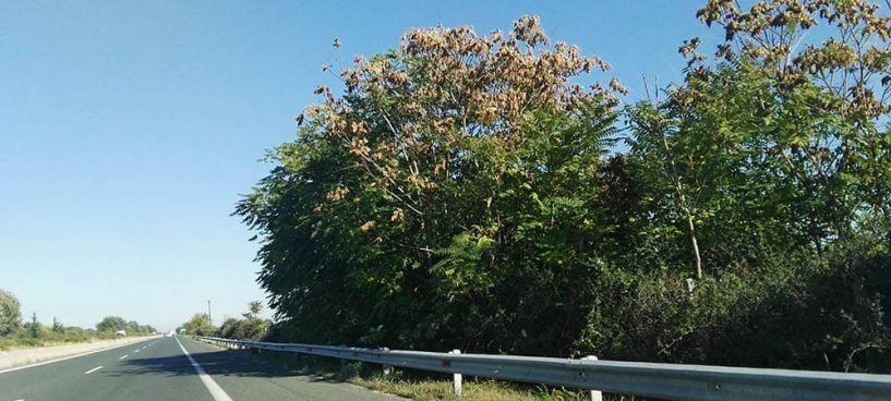 Κυκλοφοριακές ρυθμίσεις  στην Εγνατία για την κοπή μεγάλων δέντρων