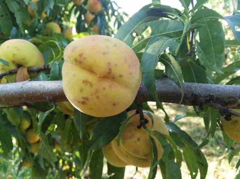 Εκδόθηκαν τα πορίσματα εκτίμησης ζημιών σε καλλιέργειες από το χαλάζι της 31-05-2020 σε Βέροια, Μέση, Λαζοχώρι και Ταγαροχώρι