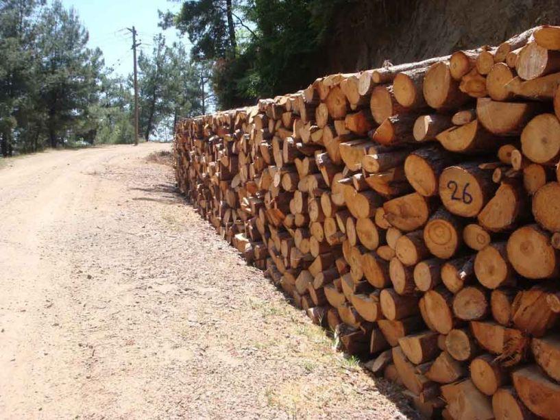 Από τον Δήμο Βέροιας - Δωρεάν καυσόξυλα σε δικαιούχους κατοίκους Καστανιάς, Πολυδένδρου και Τριποτάμου