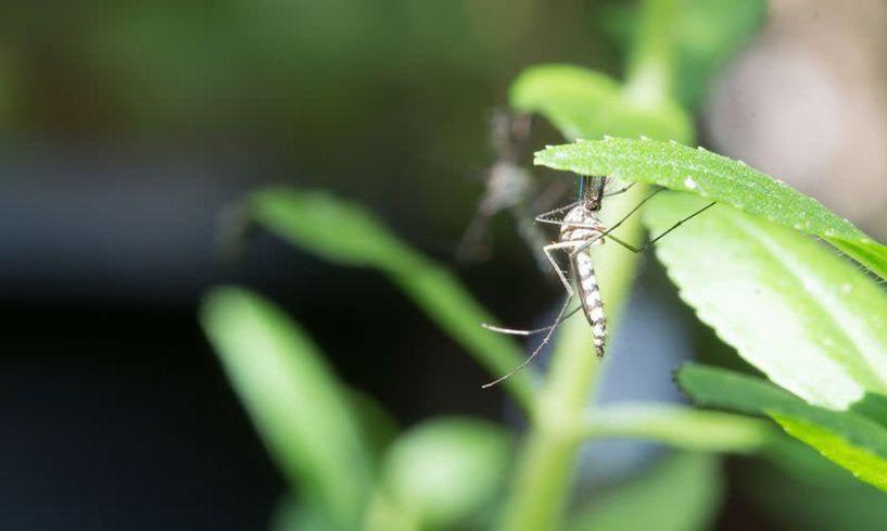 Αύριο βράδυ - Επαναληπτικός ψεκασμός στην Αγία Μαρίνα   για την αντιμετώπιση   των ακμαίων κουνουπιών
