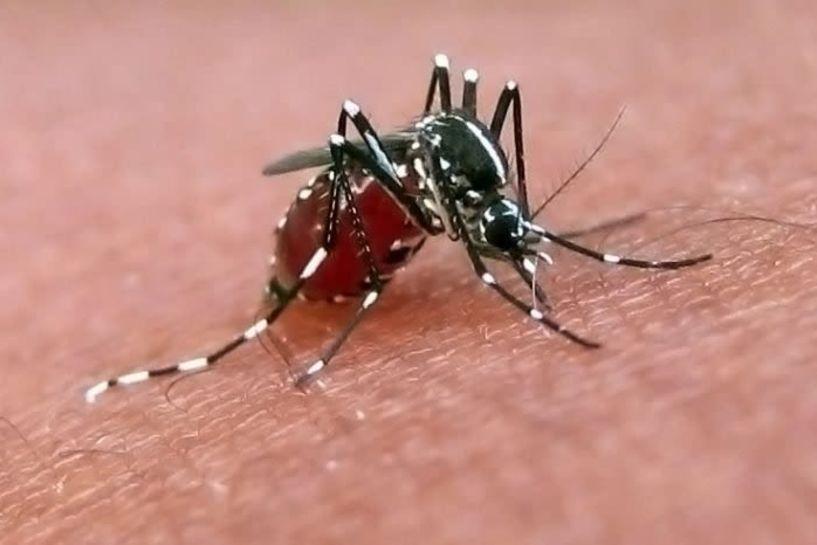 Δεν μας έφτανε ο κορωνοϊός... κρούσματα ιού Δυτικού Νείλου στην Ημαθία - Εβδομαδιαία έκθεση επιδημιολογικής επιτήρησης της λοίμωξης