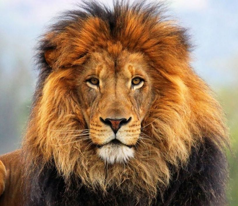 Έκφραση της Ψυχής ως σύμμαχος της Υγείας… - «Το λιοντάρι σκοτώνει κοιτάζοντας…»