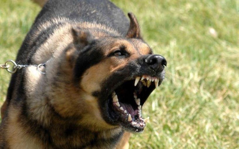 Σκύλος δάγκωσε γυναίκα στα Γιαννιτσά - Συνελήφθη ο συνοδός του