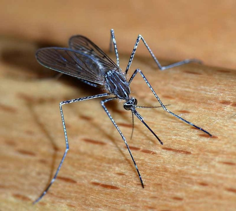 Άρχισε η επέλαση των κουνουπιών