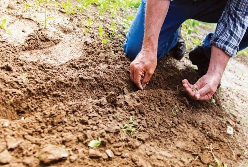 ΟΠΕΚΕΠΕ: Νέα πληρωμή σε δικαιούχους αγρότες