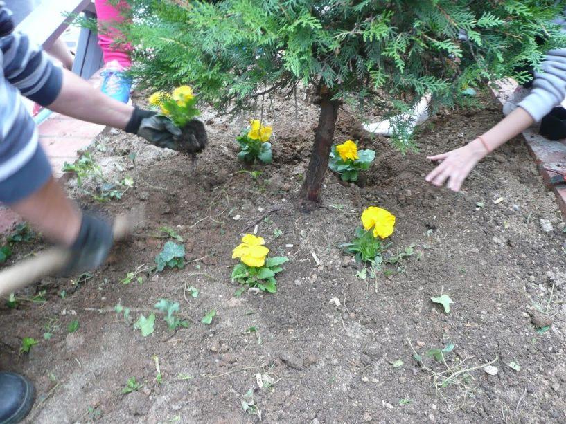 Ανθοφύτευση στον περιβάλλοντα χώρο θα πραγματοποιήσει ο Σύλλογος Γονέων και Κηδεμόνων του Μουσικού Σχολείου Βέροιας
