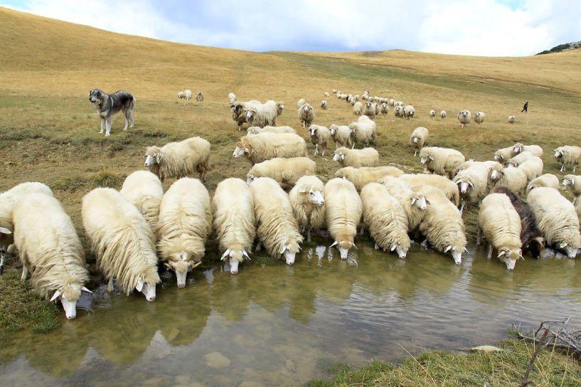 Πανελλήνια Ένωση  Κτηνοτρόφων προς Υπουργό για τη φέτα: «Προχωρήστε  σε ελέγχους, στο εισαγόμενο αιγοπρόβειο γάλα»