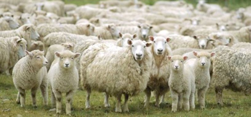 Πρόσκληση για το μέτρο βιολογικής κτηνοτροφίας  ύψους 200 εκατ. ευρώ