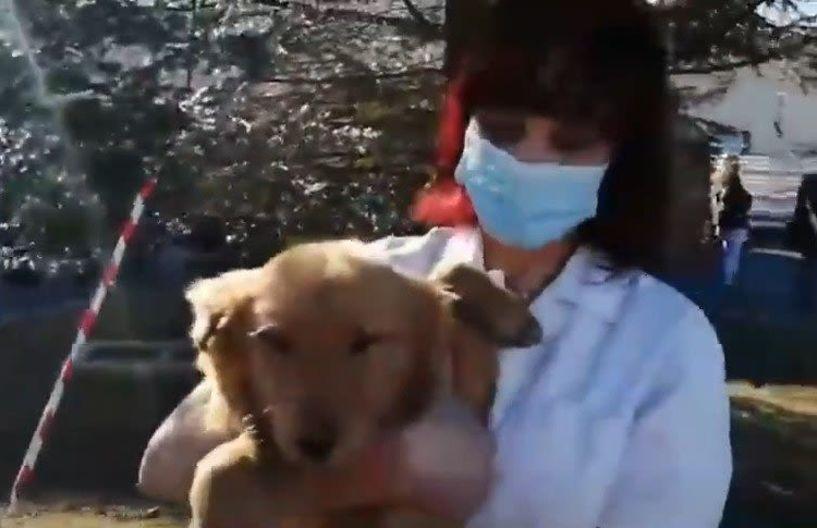 Το παιχνίδι του Μητσοτάκη με το σκυλάκι στο νοσοκομείο Βέροιας (Βίντεο)