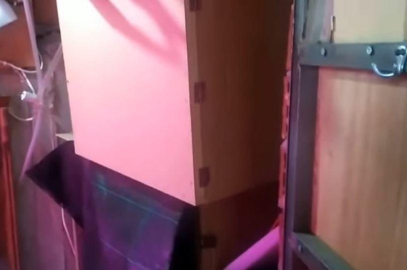 Νάουσα: Δείτε το βίντεο με τους αστυνομικούς να εντοπίζουν την υδροπονική καλλιέργεια κάνναβης πίσω από την βιβλιοθήκη!