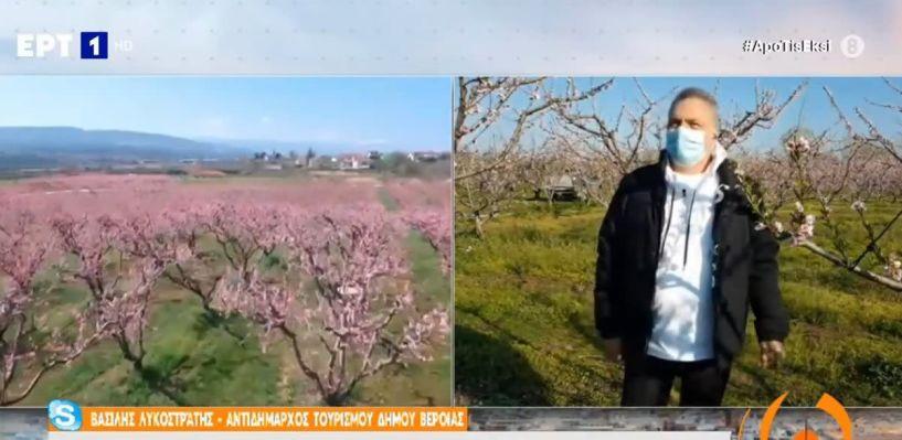 Η πρωτοβουλία του Δήμου Βέροιας για τις Ανθισμένες Ροδακινιές στην εκπομπή «Από τις 6» της ΕΡΤ1
