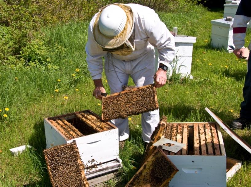 Π.Ε. Ημαθίας: Μέχρι 20 Ιανουαρίου οι αιτήσεις για αντικατάσταση κυψελών και στήριξης της νομαδικής μελισσοκομίας