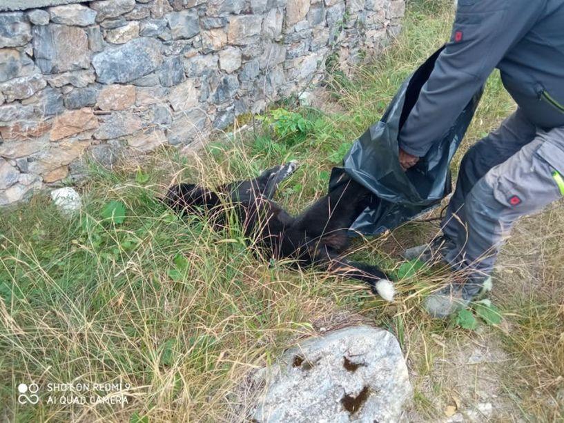 Αδιανόητο!  Άγνωστοι στο Σέλι δηλητηρίασαν τέσσερα σκυλιά και μια γάτα! - Καταγγελία των κατοίκων στην Αστυνομία