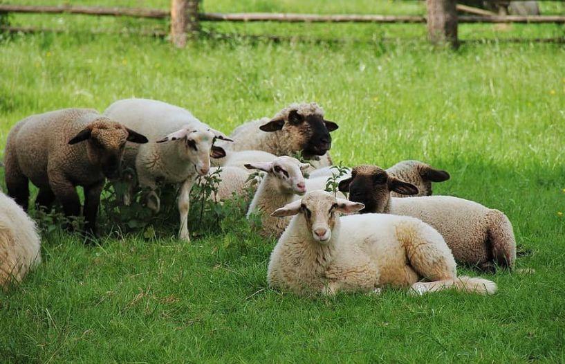 Ενημέρωση κτηνοτρόφων της Ημαθίας για την κατανομή βοσκήσιμων γαιών 2020