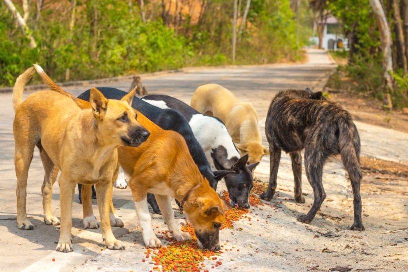 Επίθεση αγέλης σκυλιών σε ζευγάρι και παιδί στο καρότσι, κοντά στο πάρκο των Αγ. Αναργύρων