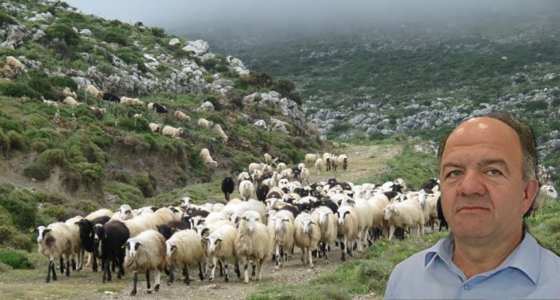 Πρόεδρος Πανελλήνιας Ένωσης Κτηνοτρόφων στον ΑΚΟΥ 99.6: «Φέτος ήταν μια άκρως καταστροφική χρονιά για τους αιγοπροβατοτρόφους»