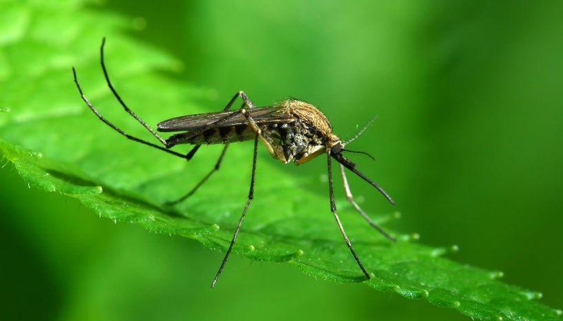 Ψεκασμός ULV στο Λαζοχώρι για την αντιμετώπιση των ακμαίων κουνουπιών