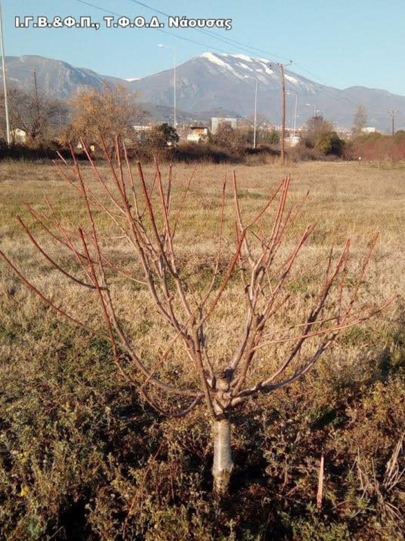 To Agroweek της ΕΡΤ 3 στο Ινστιτούτο Φυλλοβόλων Δένδρων