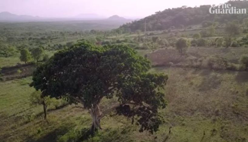 Αιθιοπία: Φύτεψαν 350 εκατ. δέντρα για την κλιματική αλλαγή!