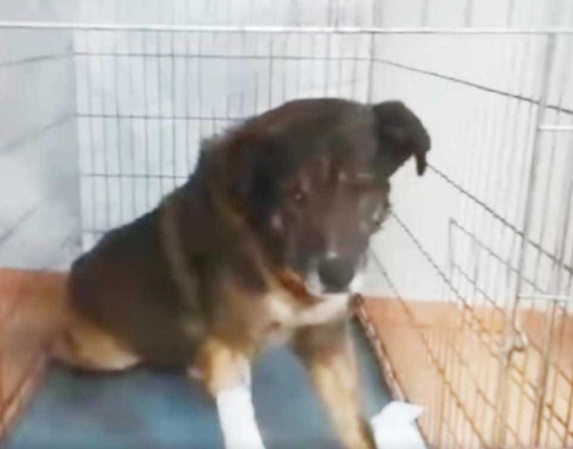 Γιαννιτσά: Αστυνομικοί έσωσαν σκύλο από δηλητηρίαση - Δείτε το βίντεο!