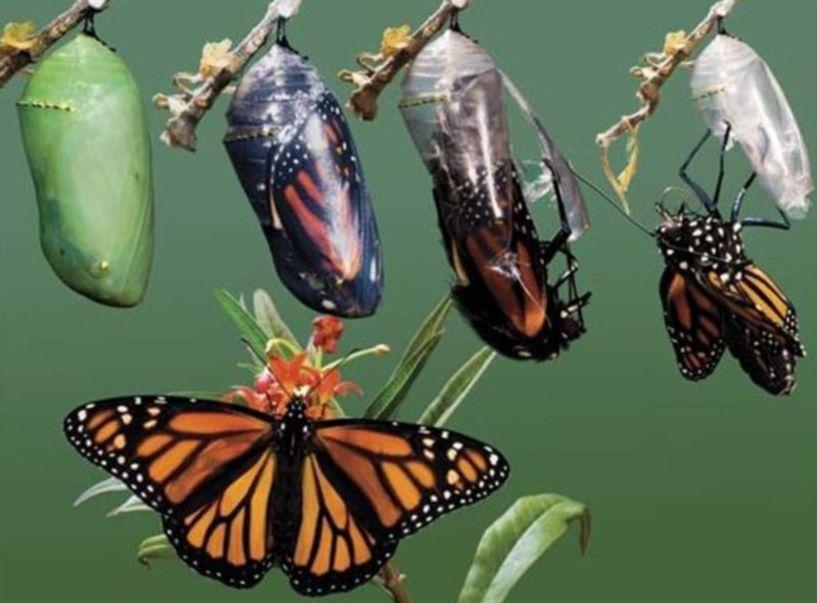 Έκφραση της Ψυχής ως σύμμαχος της Υγείας… - «Η πεταλούδα». Της Χρύσας Μπέκα, ψυχολόγου – ψυχοθεραπεύτριας