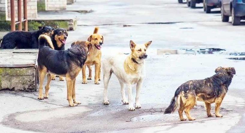 Διαμαρτυρία για την κακοποίηση ζώων  από την Κίνηση Πολιτών της περιοχής «Ακρόπολη»