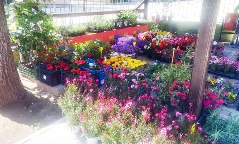 Έκθεση λουλουδιών για τη γιορτή της Μητέρας  στο 4ο Δημ. Σχολείο Βέροιας