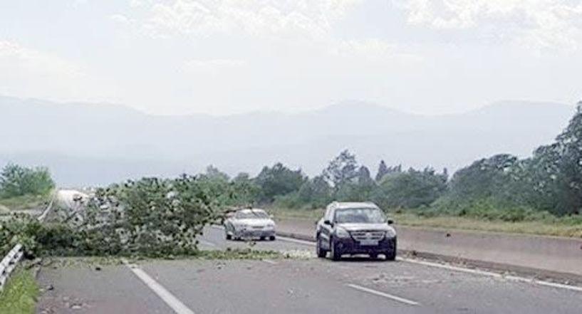 Δεν κόπηκαν ακόμα τα ψηλά δέντρα επί της Εγνατίας, όμως σε επικίνδυνες περιπτώσεις παρεμβαίνει ο Δήμος