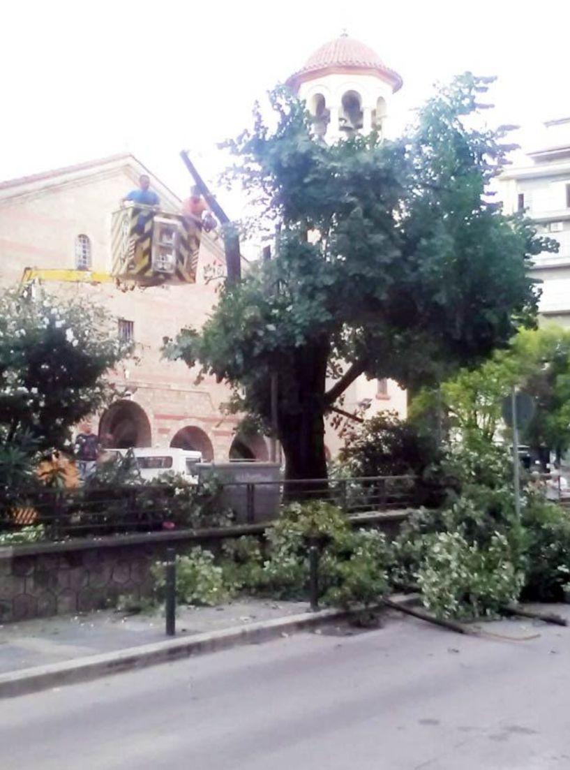 Παρέμβαση του δήμου με γερανοφόρο για τα δέντρα στον Αγ. Αντώνιο