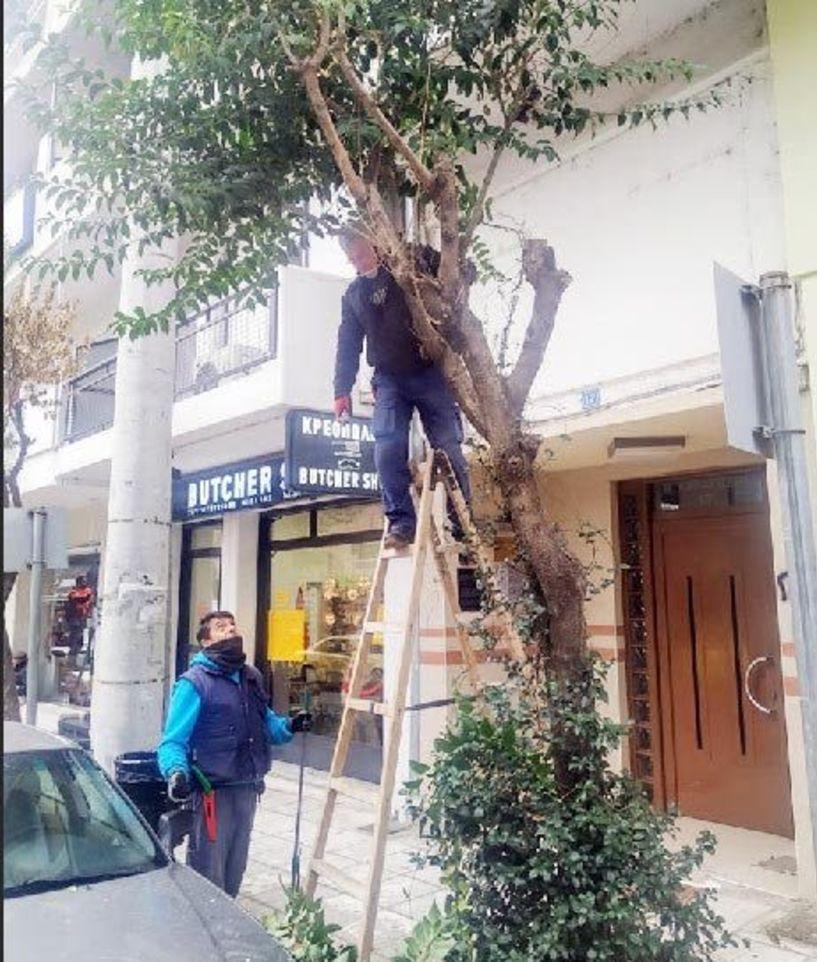Κλάδεψαν τα δέντρα που έχουν απομείνει στο κέντρο της Βέροιας