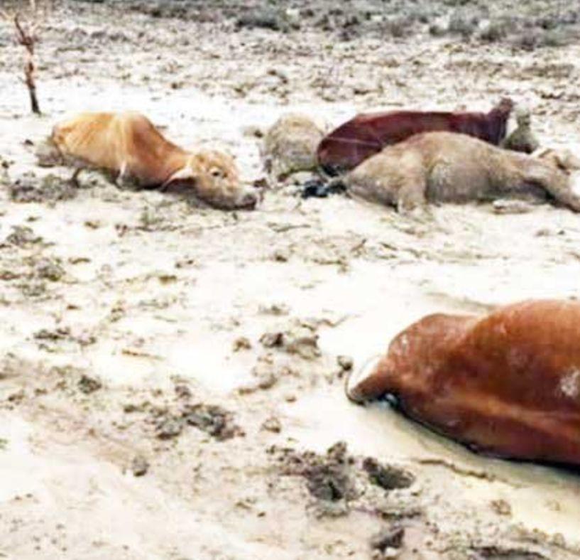 Με ένα τηλεφώνημα, θα συλλέγονται άμεσα και χωρίς οικονομική επιβάρυνση, νεκρά ζώα από κτηνοτροφικές Μονάδες