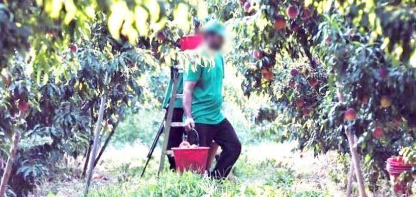 Σε έξι δόσεις η εκκαθάριση εισφορών αγροτών για το εργόσημο