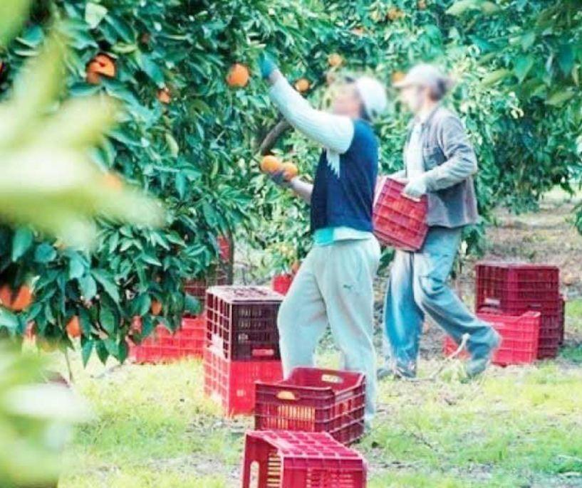 Μήπως να μιμηθούμε την Ιταλία που δικαιούχοι επιδόματος ανεργίας πρέπει να βοηθήσουν στην συγκομιδή αγροτικών προϊόντων;