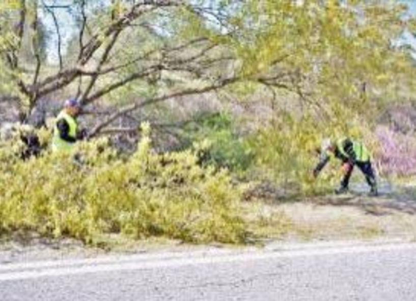 Συνεχίζονται τα κυλοφοριακά μέτρα στο δρόμο Νησελίου - Κυψέλης λόγω κοπής δέντρων