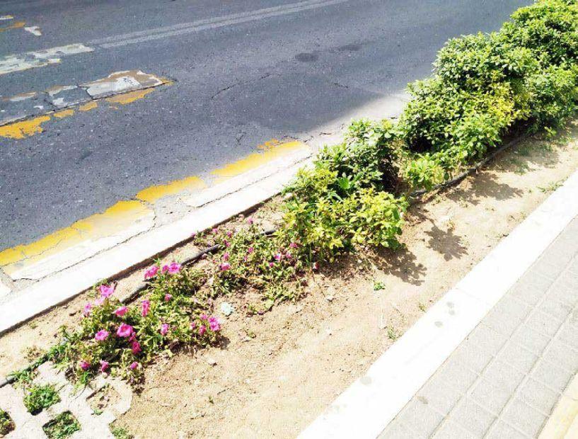 Πατημένα λουλούδια και σκουπίδια στα παρτέρια που φτιάχτηκαν πριν 1 εβδομάδα!