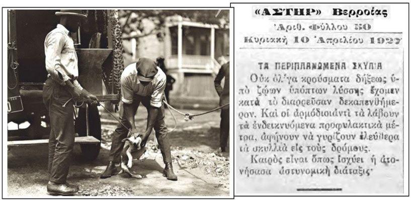 Αδέσποτα ζώα: μια τοπική παράδοση (;) *Του Πάρη  Παπακανάκη