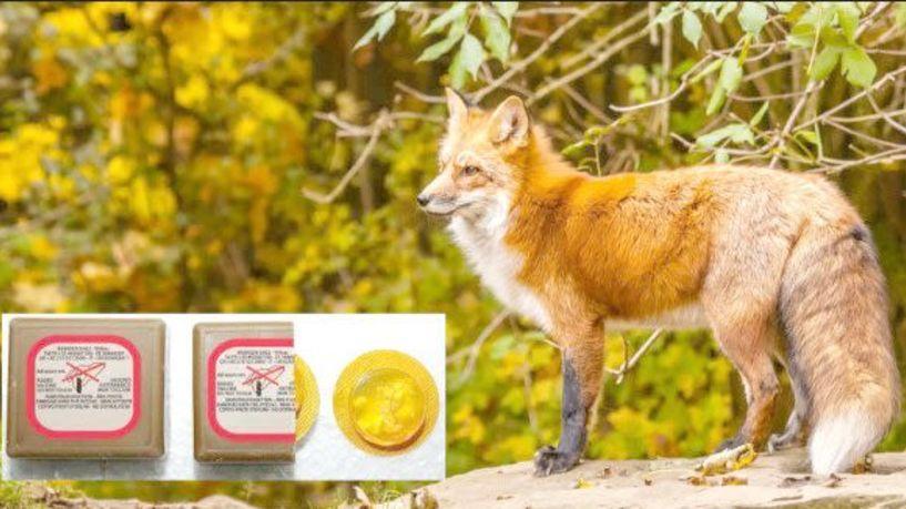 Ξεκίνησε η 8η εκστρατεία ρίψης  δολωμάτων από αέρος για εμβολιασμό των αλεπούδων κατά της λύσσας